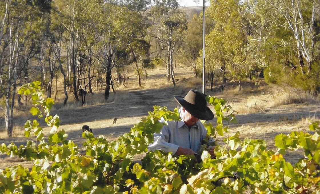 Roger tackles the vines